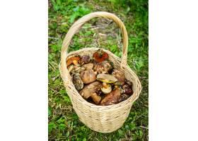 新近地捡起蘑菇篮子_13901579
