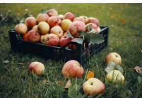 新近地被采摘的红色苹果的室外照片在塑料箱_11284636
