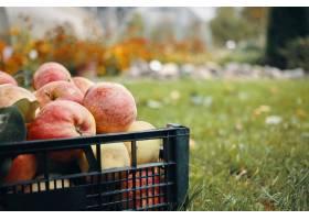 新鲜的成熟红色苹果播种的画象在草的在庭院_11284641