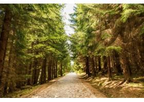 令人迷人的观点的树围拢的路在公园在一个晴_10119660