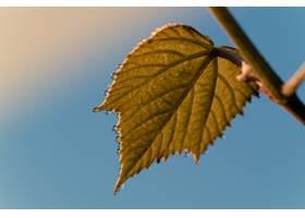 低角度射击秋天叶子有蓝天的_15696503