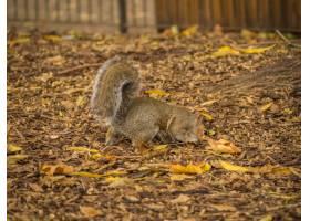 使用与干槭树的逗人喜爱的灰鼠在白天期间在_10759383
