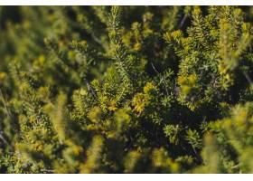 充分森林的大角度射击了不同种类的树和其他_10119715