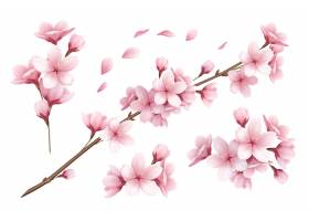 现实套美丽的佐仓分支花和瓣例证_7251944