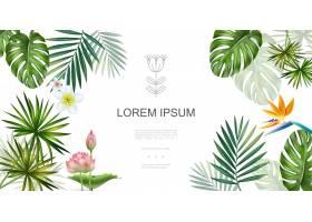 现实热带植物花卉概念与赤素馨花莲花鸟天堂_12986826