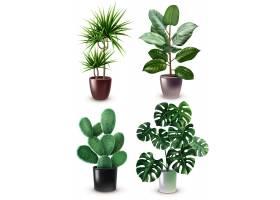 现实的室内植物图标集_6380096