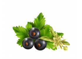 现实的清凉茶成份用叶子黑醋栗莓果和菩提树_17544925