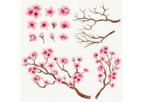 樱花树枝和鲜花收藏_13109124