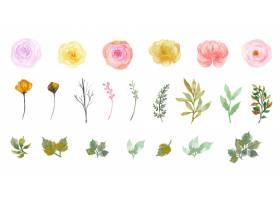 套华美的个别水彩花和叶子汇集_13304961