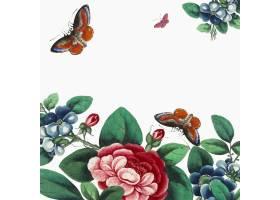 中国绘画以鲜花和蝴蝶壁纸为特色_3593292