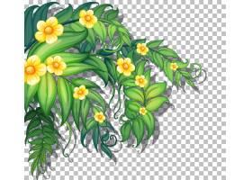 与叶子的热带花在透明_165112