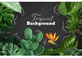 与室内植物的现实图象的热带背景花和叶子在_14265898