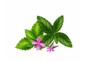 与梅丽莎叶子和柳草本花的现实草本或绿茶成_17544930
