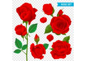 玫瑰现实透明集合与被隔绝的红色花_5084105