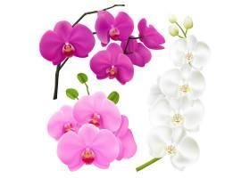 兰花鲜花现实五颜六色的集合_4320697