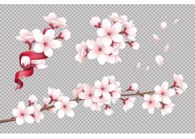 透明现实盛开的樱桃花和瓣例证_7251949