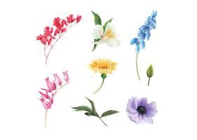 套水彩花蕾被隔绝的元素的例证_5589370