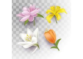 被隔绝的春天花有透明背景
