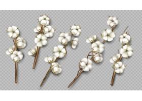 现实的棉花分支与鲜花和茎
