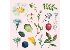 果子和花传染媒介葡萄酒集合手拉的例证